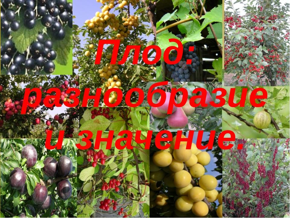 Плод: разнообразие и значение.