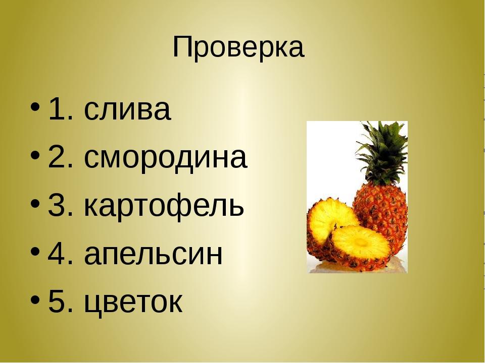 Проверка 1. слива 2. смородина 3. картофель 4. апельсин 5. цветок