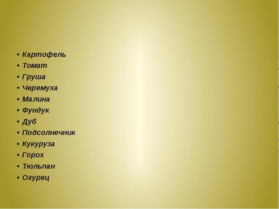 Картофель Томат Груша Черемуха Малина Фундук Дуб Подсолнечник Кукуруза Горох...