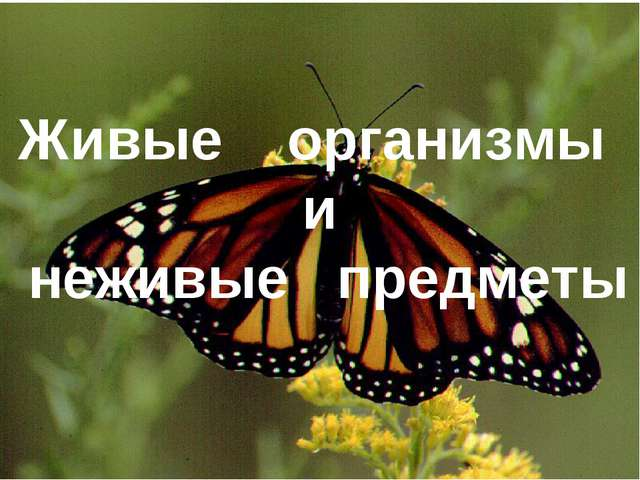 Живые организмы и неживые предметы