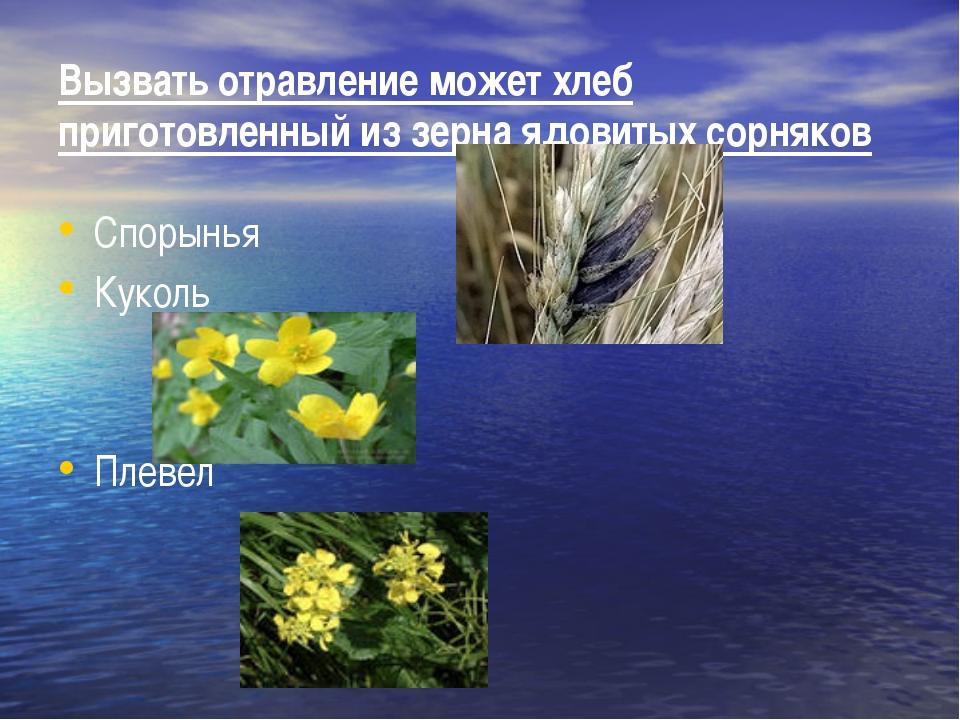 Вызвать отравление может хлеб приготовленный из зерна ядовитых сорняков Споры...