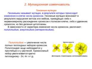 Геномные мутации Геномными называют мутации, в результате которых происходит