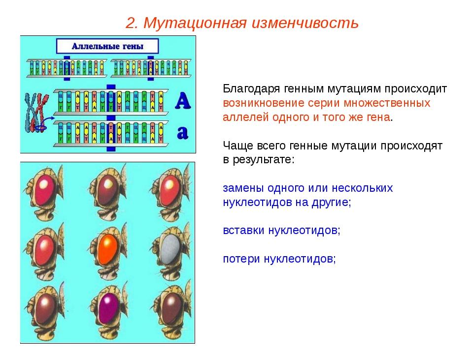 Благодаря генным мутациям происходит возникновение серии множественных аллеле...