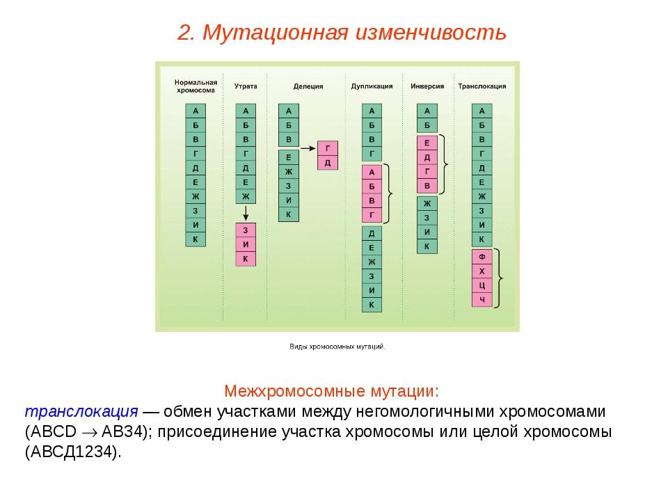 Межхромосомные мутации: транслокация — обмен участками между негомологичными...