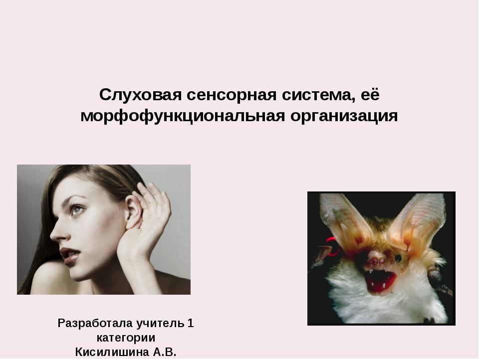 Слуховая сенсорная система, её морфофункциональная организация Разработала уч...