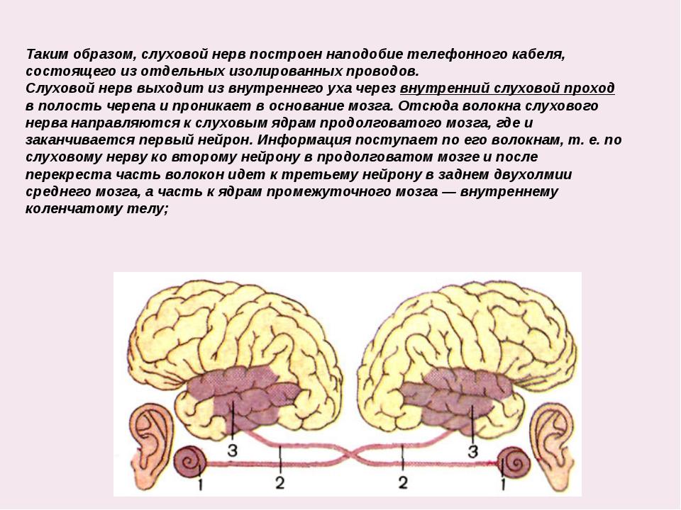 Таким образом, слуховой нерв построен наподобие телефонного кабеля, состояще...