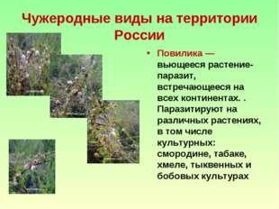 Чужеродные виды на территории России Повилика — вьющееся растение-паразит, вс