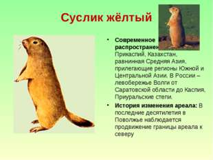 Суслик жёлтый Современное распространение: Северный Прикаспий, Казахстан, рав