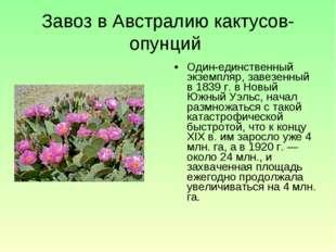 Завоз в Австралию кактусов-опунций Один-единственный экземпляр, завезенный в