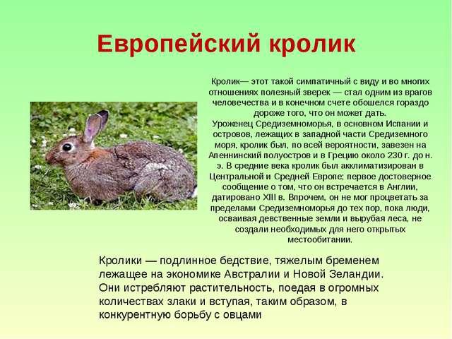 Европейский кролик Кролик— этот такой симпатичный с виду и во многих отношени...