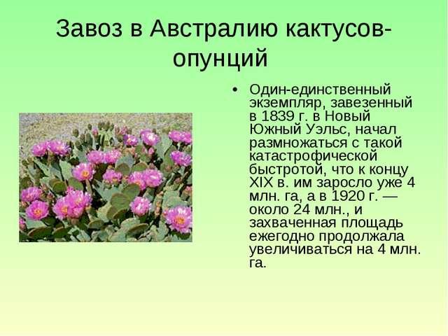 Завоз в Австралию кактусов-опунций Один-единственный экземпляр, завезенный в...
