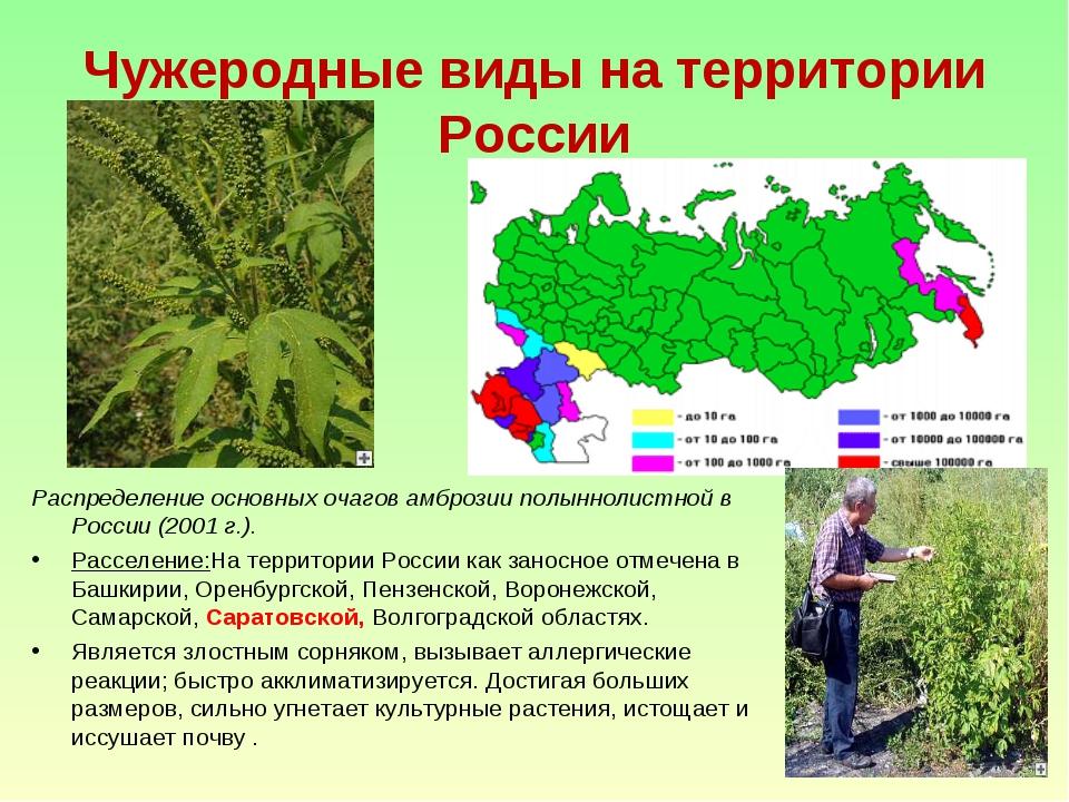 Чужеродные виды на территории России Распределение основных очагов амброзии п...