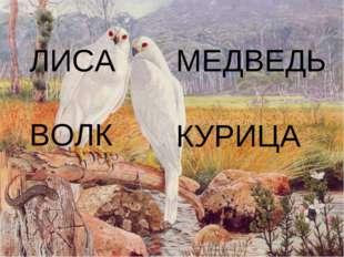 ЛИСА МЕДВЕДЬ ВОЛК КУРИЦА