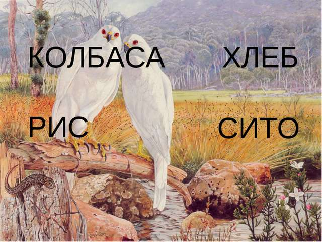 КОЛБАСА ХЛЕБ РИС СИТО
