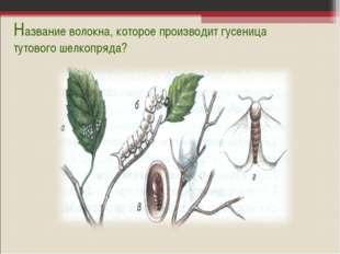Название волокна, которое производит гусеница тутового шелкопряда?