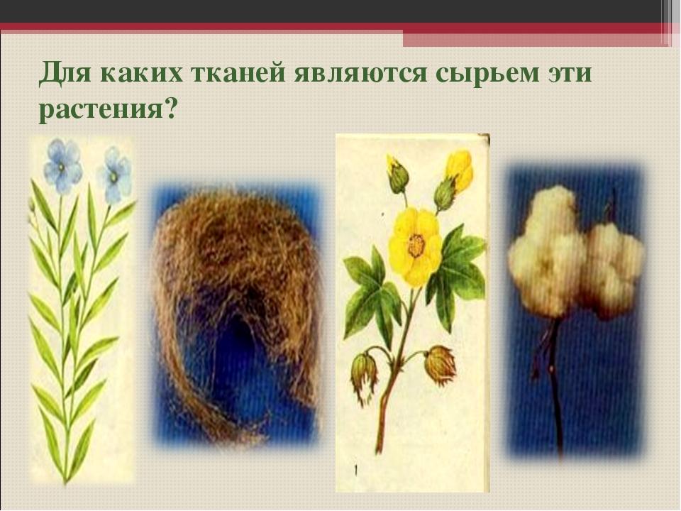 Для каких тканей являются сырьем эти растения?
