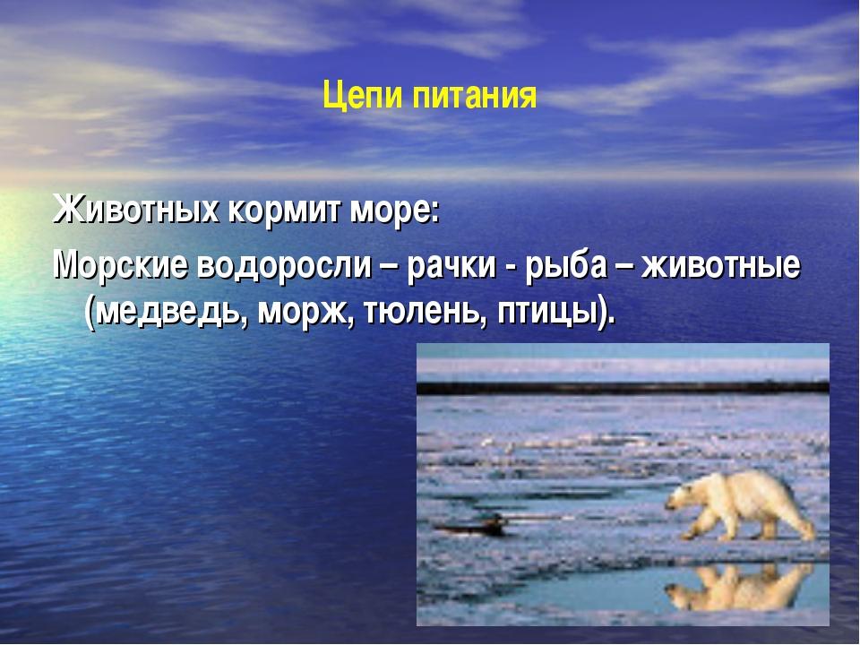 Цепи питания Животных кормит море: Морские водоросли – рачки - рыба – животны...