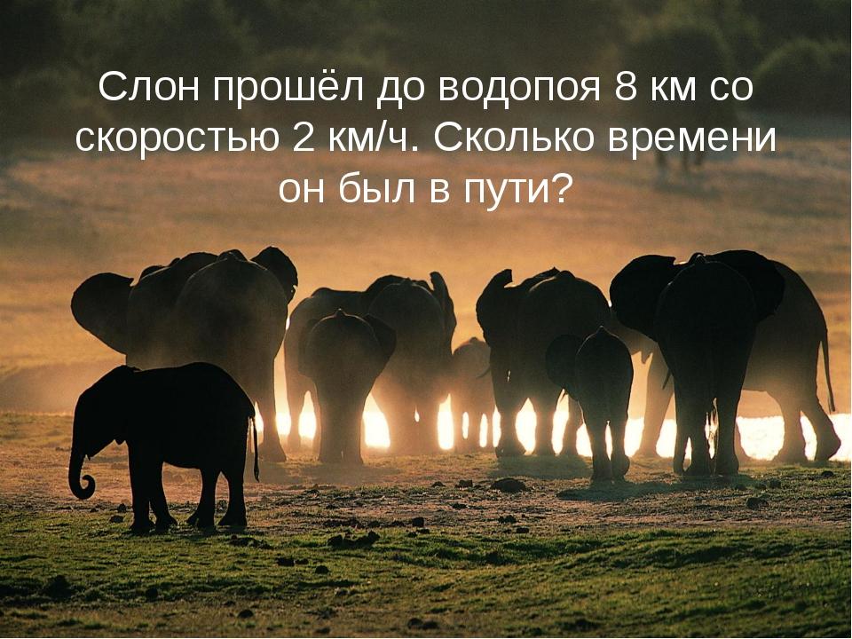 Слон прошёл до водопоя 8 км со скоростью 2 км/ч. Сколько времени он был в пути?