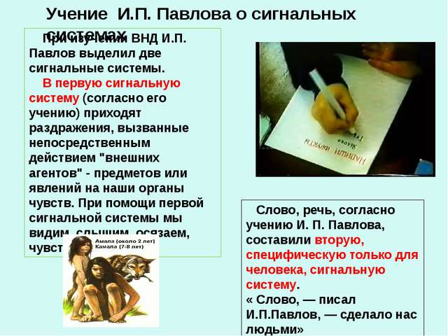Учение И.П. Павлова о сигнальных системах При изучении ВНД И.П. Павлов выдели...