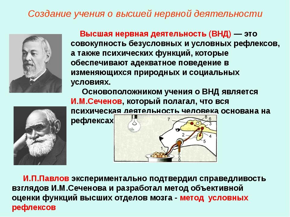 Создание учения о высшей нервной деятельности Высшая нервная деятельность (ВН...