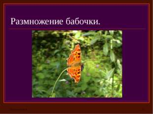 Размножение бабочки.