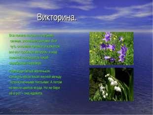 Викторина. Вся поляна покрыта голубыми, синими, розовыми цветами. Все чуть с