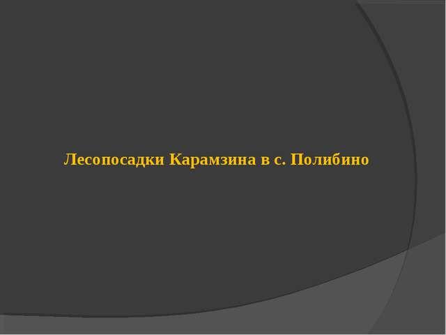 Лесопосадки Карамзина в с. Полибино