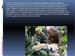 В августе 2008 года Путин посетил уссурийский заповедник и надел ошейник со с