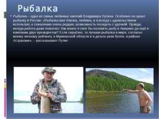 Рыбалка Рыбалка – одно из самых любимых занятий Владимира Путина. Особенно он