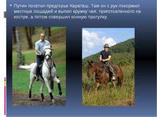 Путин посетил предгорье Караташ. Там он с рук покормил местных лошадей и выпи