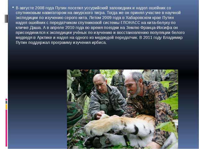 В августе 2008 года Путин посетил уссурийский заповедник и надел ошейник со с...