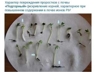 Характер повреждения проростков с почвы «Подгорный» (искривление корней, хара