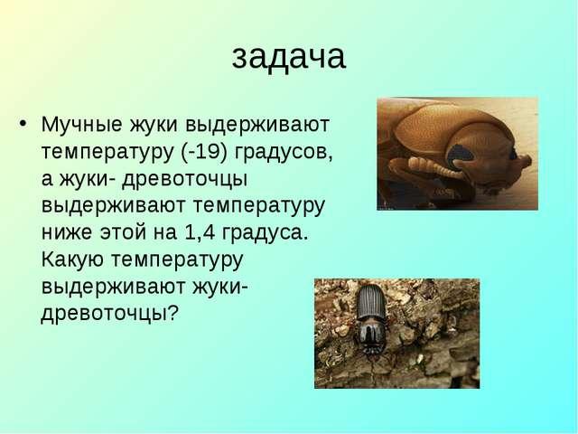 задача Мучные жуки выдерживают температуру (-19) градусов, а жуки- древоточцы...