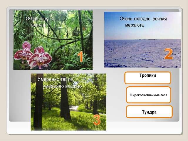 Тундра Широколиственные леса Тропики Очень холодно, вечная мерзлота Умеренно...