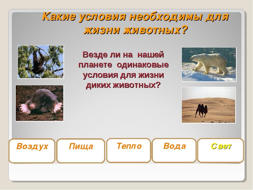 Какие условия необходимы для жизни животных? Воздух Вода Пища Тепло Свет Везд...