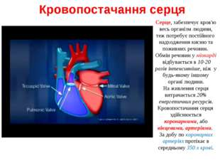 Кровопостачання серця Серце, забезпечує кров'ю весь організм людини, теж потр