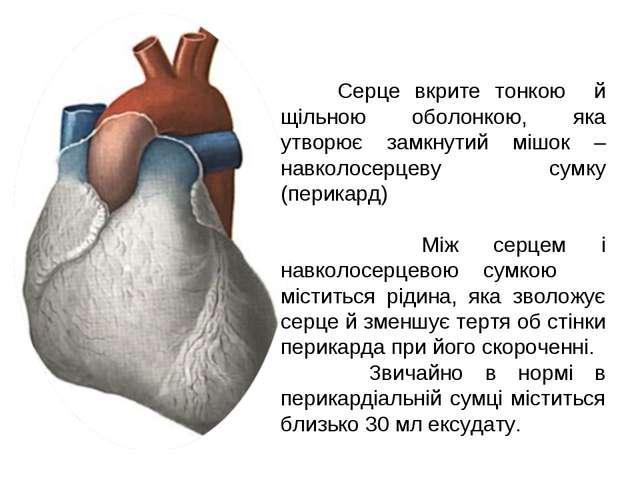 Серце вкрите тонкою й щільною оболонкою, яка утворює замкнутий мішок – навко...