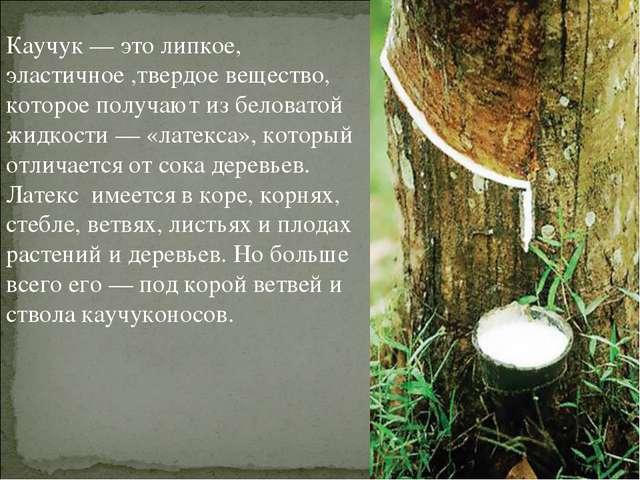 Каучук — это липкое, эластичное ,твердое вещество, которое получают из белова...