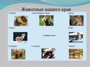 Животные нашего края 1.Рапана 2.енотовидная собака 3 рысь 4.ласка Хищники кр