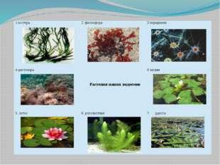 1.зостера 2. филлофора 3перидинеи 4цистозира Растениянаших водоемов 8 чилим 5