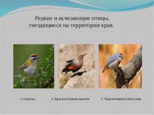 Редкие и исчезающие птицы, гнездящиеся на территории края. 1 стенолаз 2. Крас