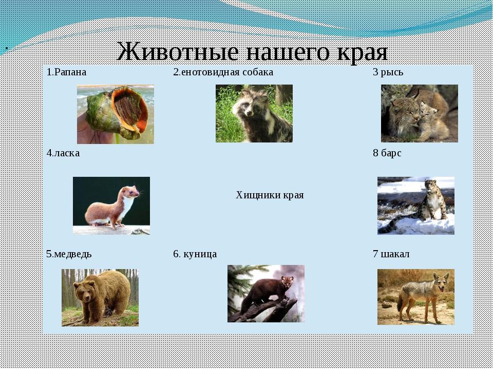 Животные нашего края 1.Рапана 2.енотовидная собака 3 рысь 4.ласка Хищники кр...