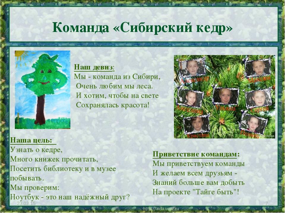 Команда «Сибирский кедр» * * Наш девиз: Мы - команда из Сибири, Очень любим...