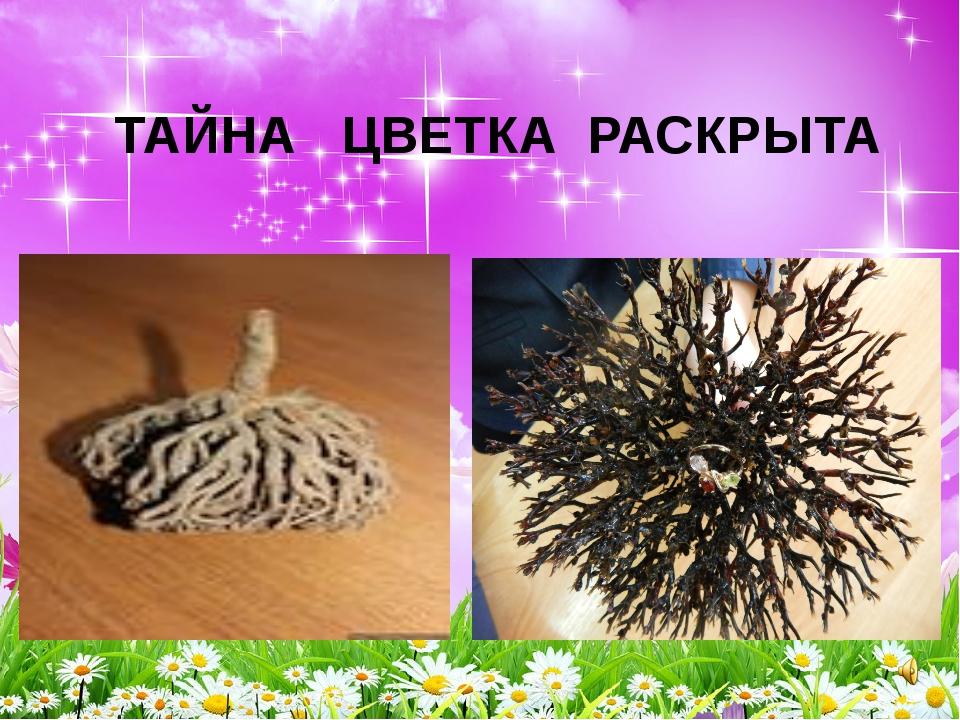 ТАЙНА ЦВЕТКА РАСКРЫТА