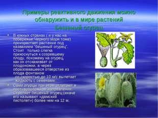 Примеры реактивного движения можно обнаружить и в мире растений Бешеный огур
