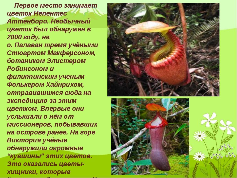 Первое место занимает цветок Непентес Аттенборо. Необычный цветок был обнару...