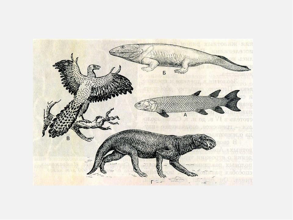 переходные формы животных картинки наличии