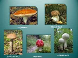 сыроежка подосиновик белый гриб мухомор шампиньон