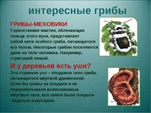 интересные грибы ГРИБЫ-МЕХОВИКИ Горностаевая мантия, облекающая тельце этого