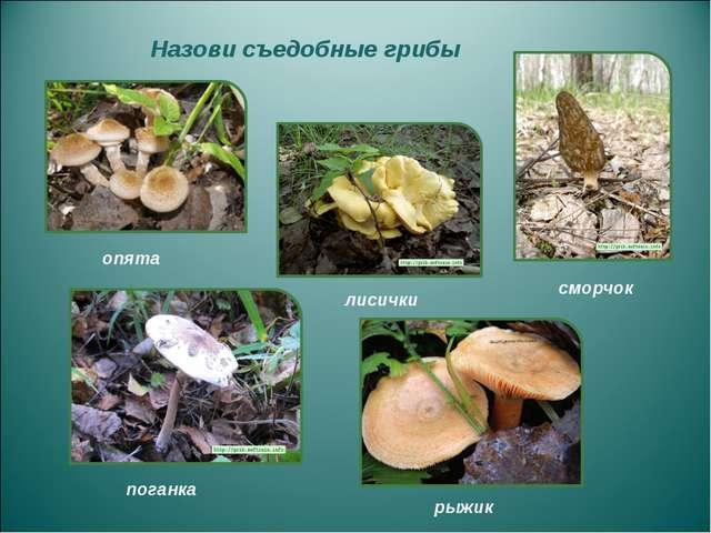 Назови съедобные грибы опята поганка сморчок рыжик лисички